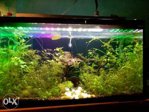 Planted fish available Neon Red fin guppy Koi