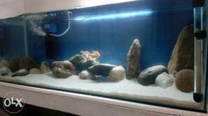 3 feet aquarium 15 days old  feets