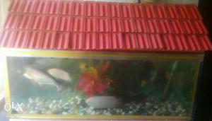 Big aquarium...i purchased it for