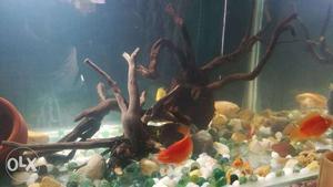 Aquarium original malesiyan drift wood, natural