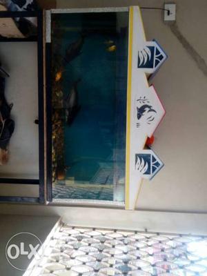 Aquariuam set fish: 2 big shark 3 small golden
