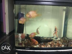 Imported black fish aquarium with fishes for sale with all