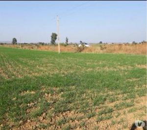 Land parcel at very premium location just near Gidc sanand a