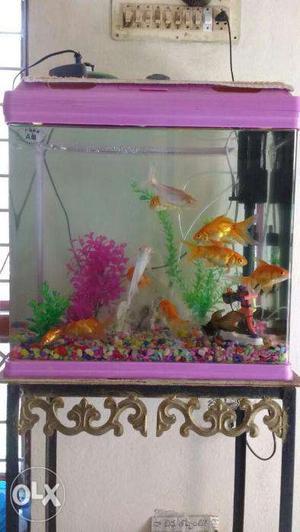 Fishes & Aquarium for sale