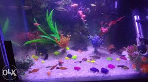 I want to sell only my fishes