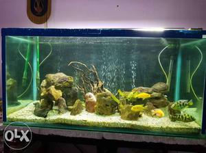 Aquarium size 4feet by 2 feet by 2 feet with