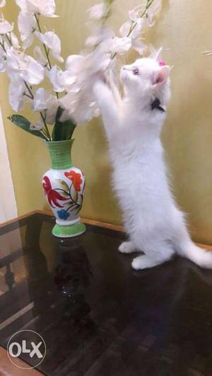 White Kitten And White Orchid