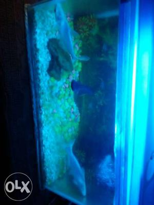 Two White And One Black Fishes 4 Inch