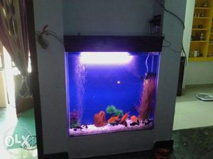 Aquarium Fish Tank PRIZE Depend your tank size