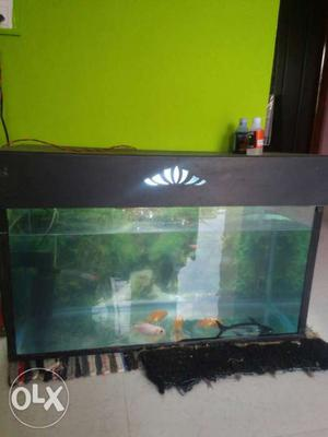 FISHTANK is in a very good condition and free fishes