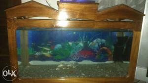 Fully furnished aquarium for sale
