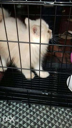 I want to exchange my male cat (I need female