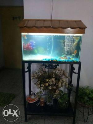 A regular sized aquarium, with all the