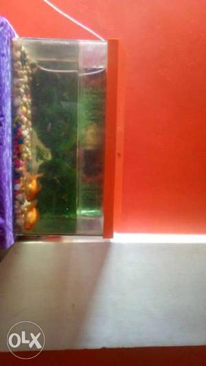 Fishtank with fishes. fishfood will be given for