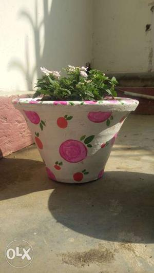 Painted pots for your home with plant.