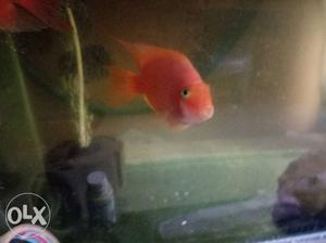 Hi I'm selling my female fish, ready for breeding