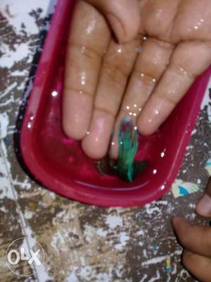 New betta fish for sale
