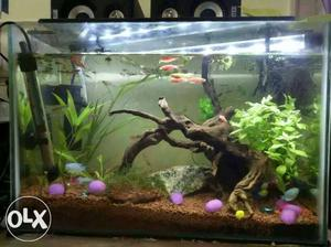 Planted aquarium with wood fishes filter top lid
