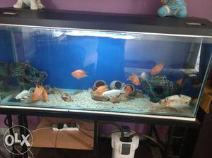 5ft aquarium with fishes.. Includes tank 12mm