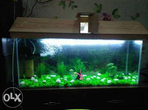 Ocean fish aquarium sunny enclave