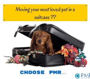 International pet moving services provided by PM Relocations