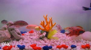 Beautiful Aquarium with Fishes, Tank Cover & Teak wood Stand