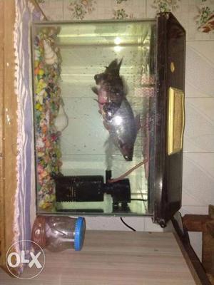 Minjiang r aquarium pump hmax 12mtr fmax | Posot Class