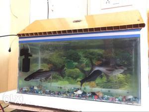 Fish aquarium with 5 big size fishes neatly