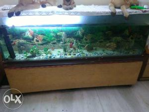 King size aquarium best for office nd house use