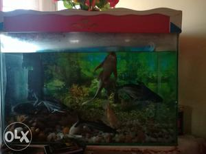 2 Aquariums with fishes for sale. 6 fishes