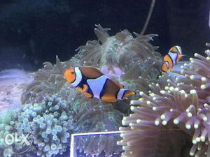 Marine nest aqua (bangalore)