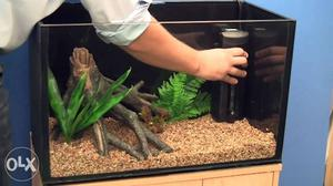Fish tank cleaning & Aquascaping