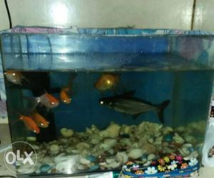 Aquarium for sale only in kolkata | Posot Class