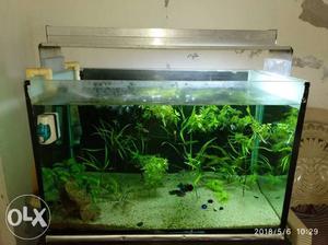 Planted Aquarium with Life support system DIY