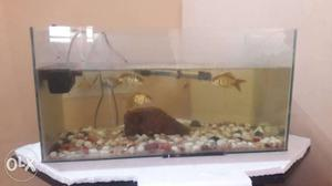 Aquarium with complete accessories with very good conditions