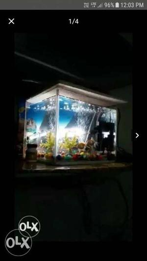 Asalamualikum fishes for sell total set fishes &