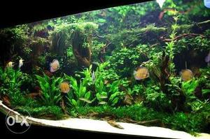 We Provide Full Aquarium Setup With All Types of tropical