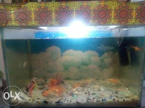 Big size aquarium... Without table.. With