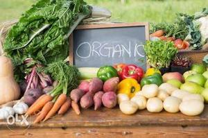 Wanted investor for organic farmning and dairy