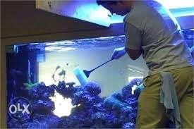 Fish tank services & sales all kinds of materials available