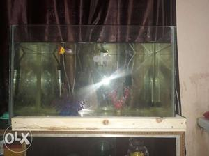 Aquarium without top only 2 months old dimension