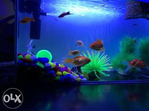 Fish Tank is new and in a good condition. 2kg