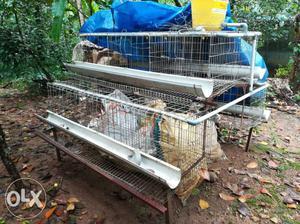 White Metal Chicken Coop In good condition. Coop for 50 hen.