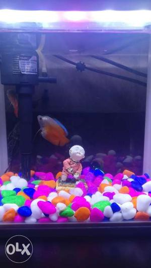 Imported fish tank(just less than 0.9ft) with top