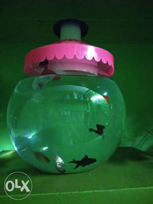 Only 1 day use big fish bowl and 4 gold fish and