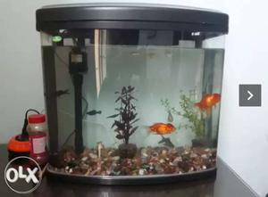 One week old aquarium (with built in air and