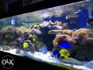 Tank breed Marine fishes, marine aquarium NEW INSTALLATION