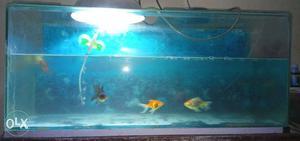 Fish tank & oxygen me cash 500rs 2 pine... urgent please