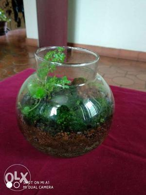 Terrarium (Home or office décor)