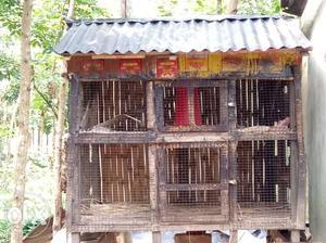 (30 p hen) hen room
